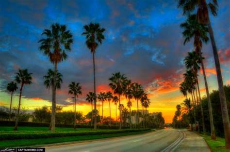 Palm Trees Along Gardens Parkway Street in Palm Beach Gardens