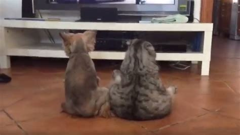 Dog & cat sit like humans to watch TV together - The Tango