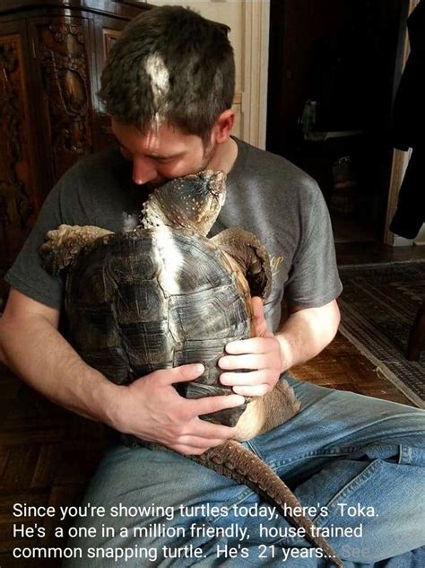 This affectionate pet snapping turtle in my fish tank FB