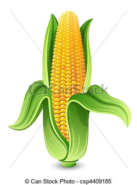 Corn ear isolated on white stock illustrations - Search
