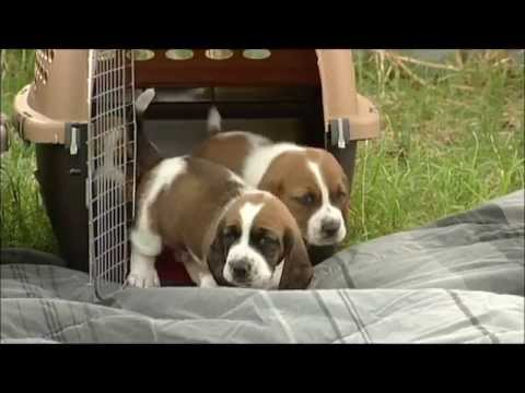 Cute Puppies, Cute Dogs, Puppy Photos, Pictures Puppys