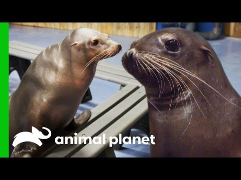 Seal Animal Stock Images, Royalty-Free Images & Vectors