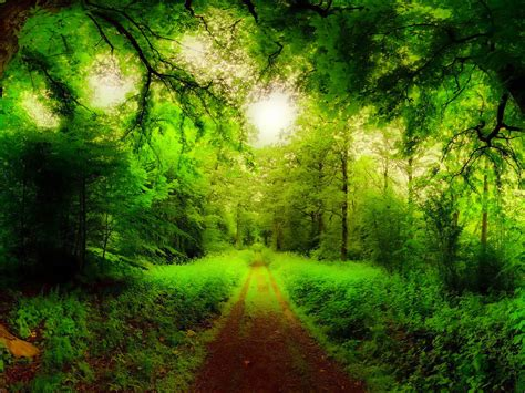 Natural Forest Road, Trees, Green Forest, Grass Green Hd
