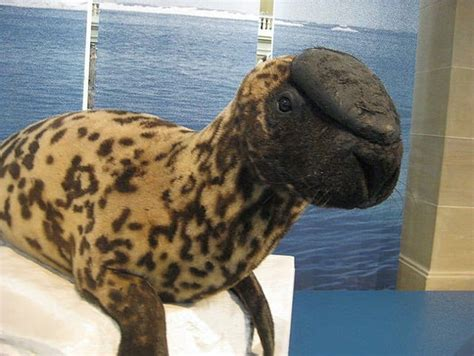 19 Strange And Wonderful Animals Could Go Extinct In Your