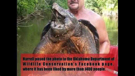 Giant 100lb Alligator Snapping Turtle Catch - YouTube