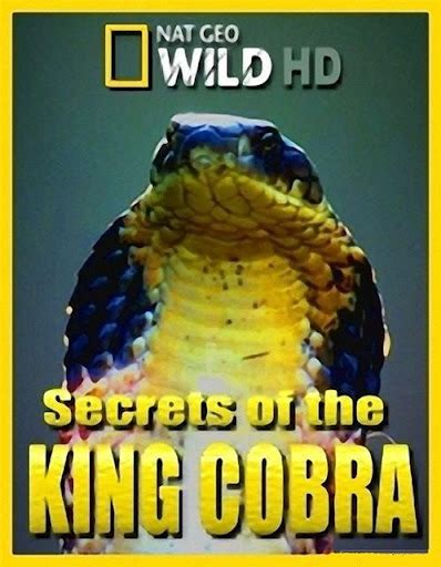 Secrets Of The King Cobra ~ Store Free Download Movies